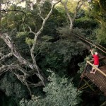 Dlinza Forest Aerial Boardwalk Eshowe