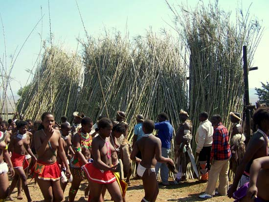 Delivering reeds