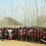 In the Kraal with Reeds